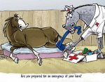 Equine Emergency First Aid – Basic and Advanced