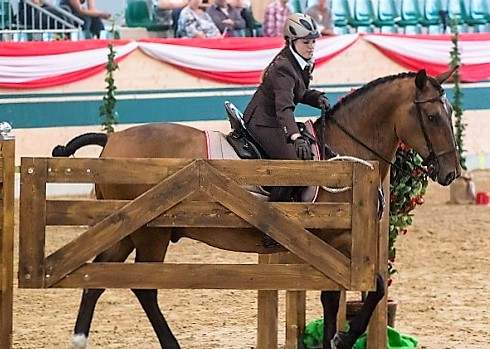 Introduction to Working Equitation