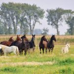 Valley Equestrian Centre