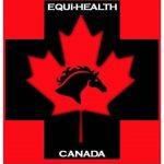 Advanced Equine Emergency First Aid
