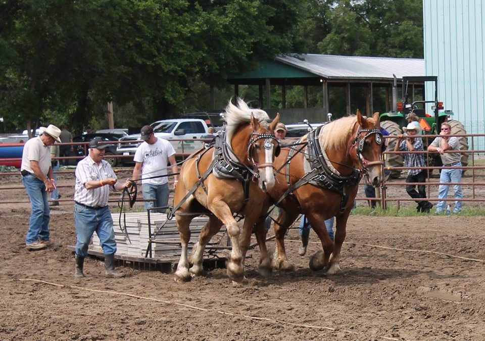 Town & Country Fair and Rodeo