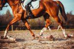 Horse Trials Fun Day