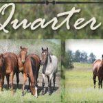 Allen Quarter Horses Logo