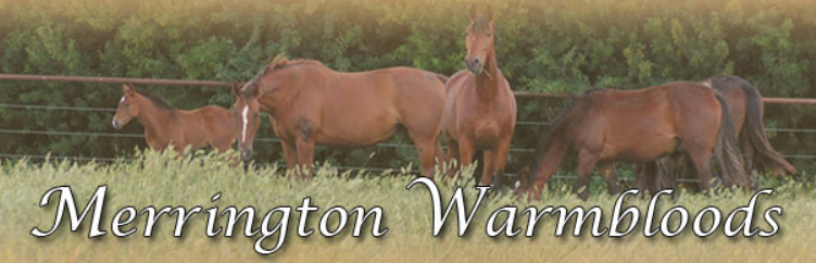 Merrington Warmbloods Stable
