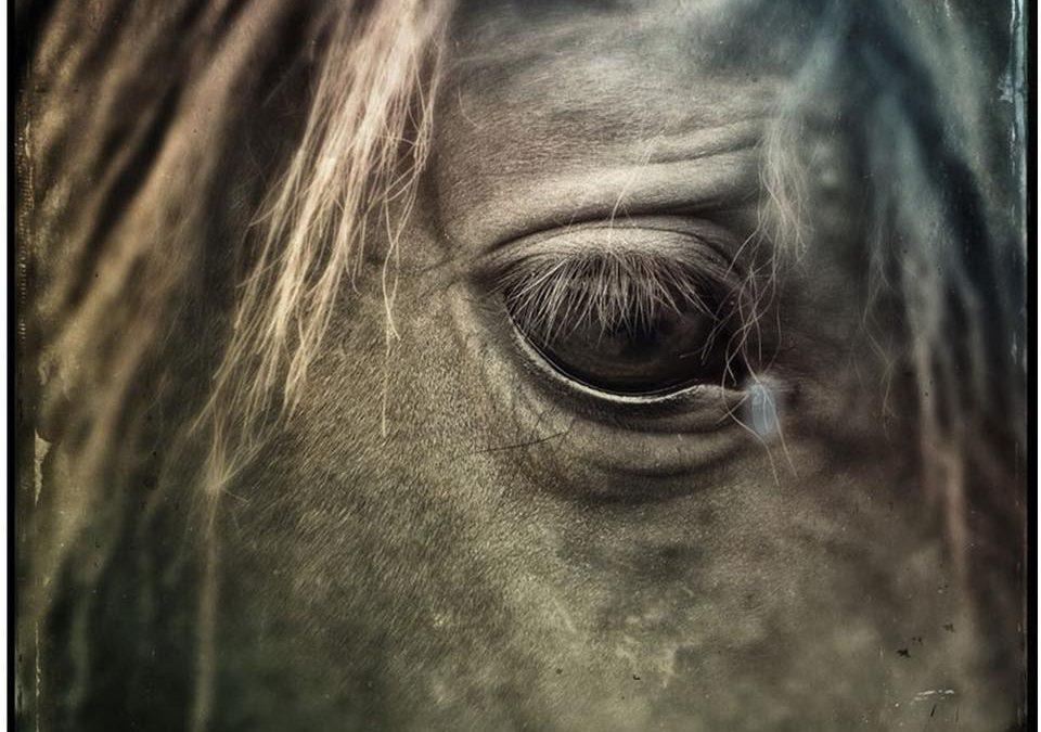 Equine Health & Emergency First Aid