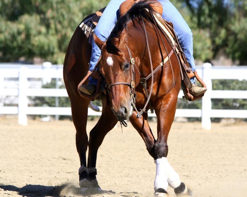 Horsemanship Clinic Fundraiser
