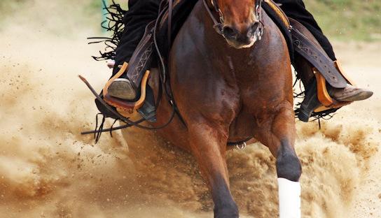 Craig Johnson Reining/Horsemanship Clinic