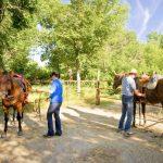 camping and horses