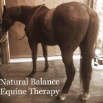 Natural Balance Equine Therapy Logo
