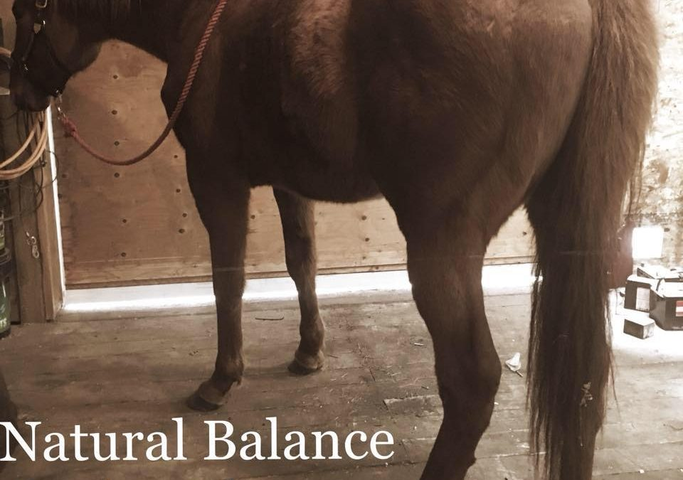 Natural Balance Equine Therapy