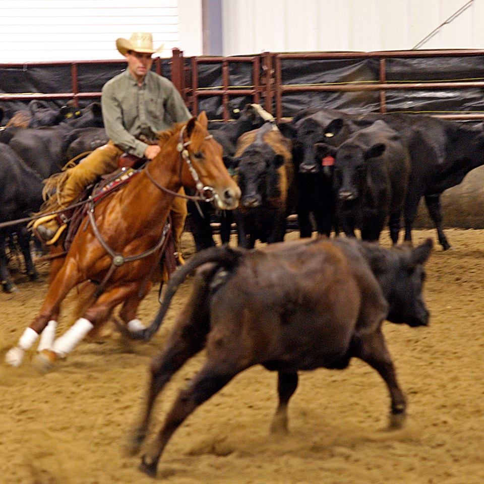 Reined Cow Horse Show