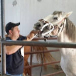 T3 Equine Horse Dentist Leo Tournier Duck Lake