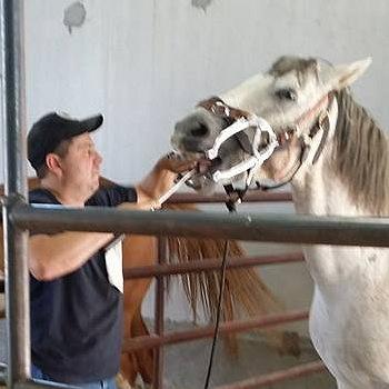 T3 Equine Health
