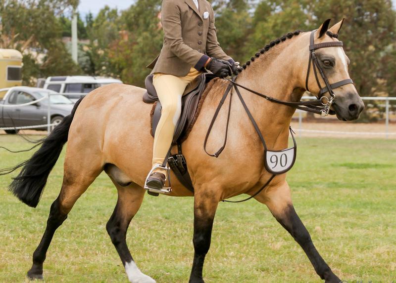 Quarter Horse Show
