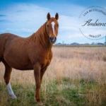 Ambience Imagery Lisa McCullough Estevan Saskatchewan